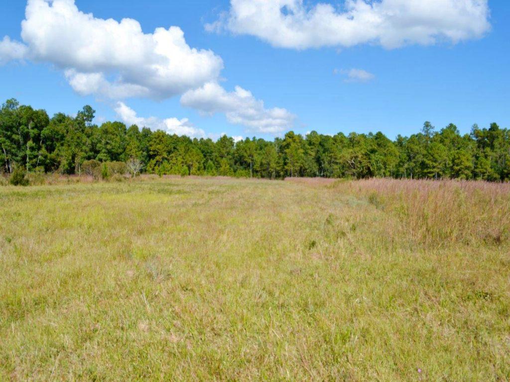 Crescent City Ranch : Crescent City : Putnam County : Florida
