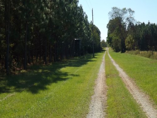 440 Acre Wildlife Sanctuary : Bluffton : Clay County : Georgia
