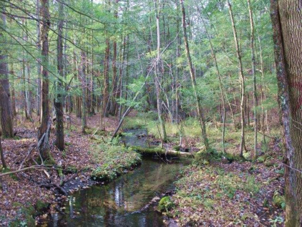 Tug Hill Woodland Paradise : Taberg : Oneida County : New York