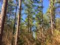 Merchantable Timber Investment