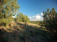 Canyon Milagro 35