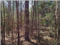 80 Acres Hunting Land, Timber