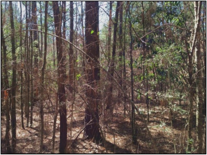 80 Acres Hunting Land, Timber : Columbia : Marion County : Mississippi