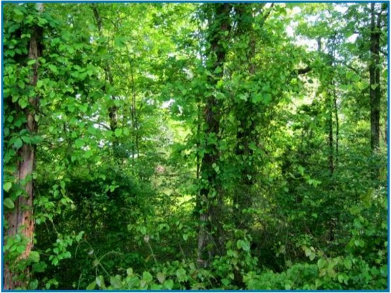 6 Acres In Rankin County, Mississip : Pearl : Rankin County : Mississippi