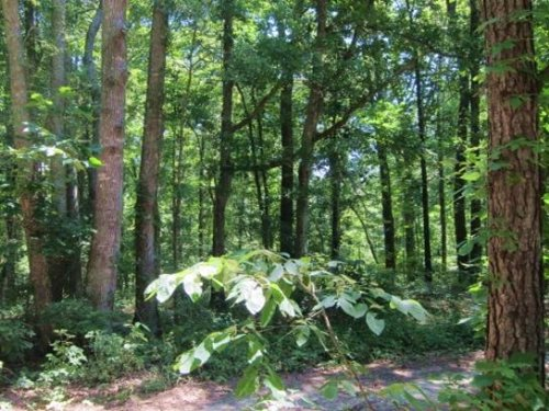 21.82 Acres In Hinds County, Missis : Byram : Hinds County : Mississippi