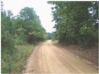 55.90 Acres Hunting Land, Timber