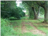 60 Acres Plantation Land