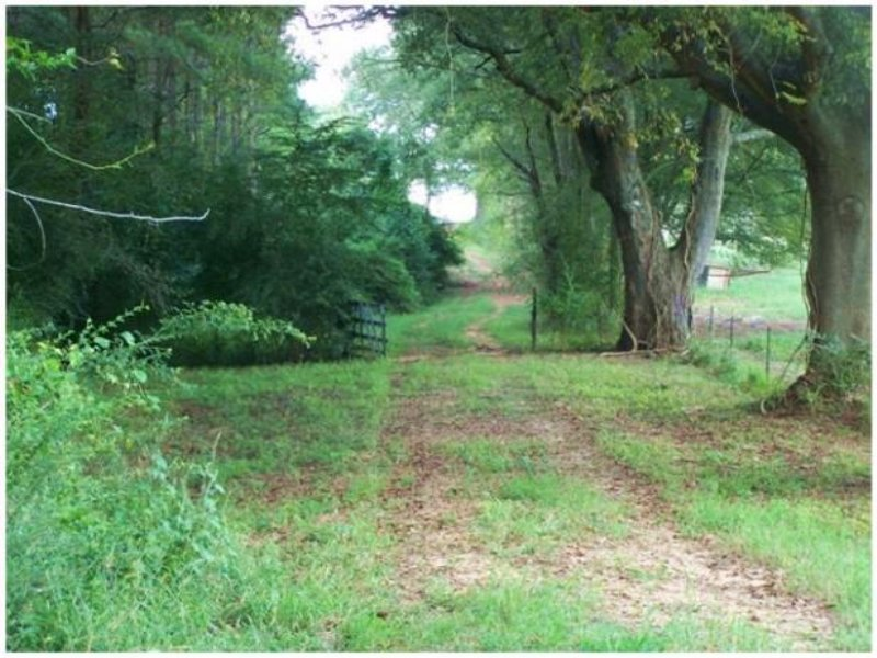 60 Acres In Newton County, Mississi : Conehatta : Newton County : Mississippi