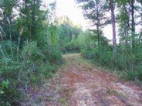 76.4 Acres Hunting Land, Plantation
