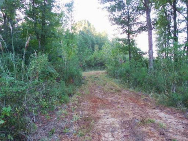 76.4 Acres In Attala County, Missis : Ethel : Attala County : Mississippi