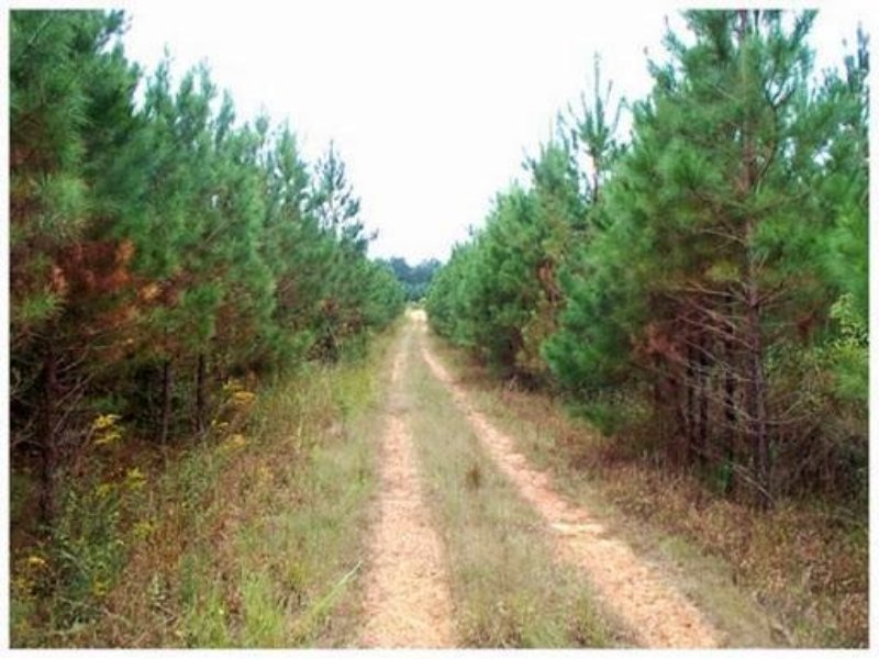 120 Acres In Calhoun County, Missis : Banner : Calhoun County : Mississippi