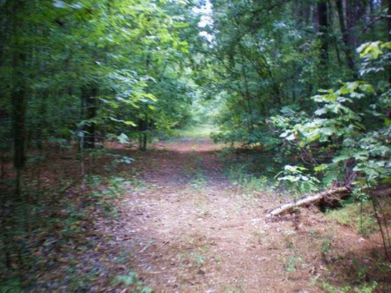 213 Acres In Madison County, Missis : Canton : Madison County : Mississippi