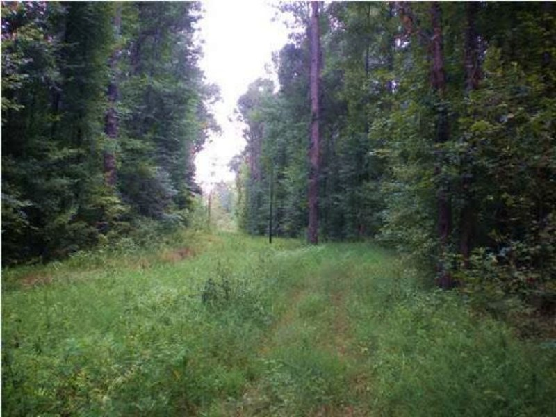 295 Acres In Madison County, Missis : Canton : Madison County : Mississippi