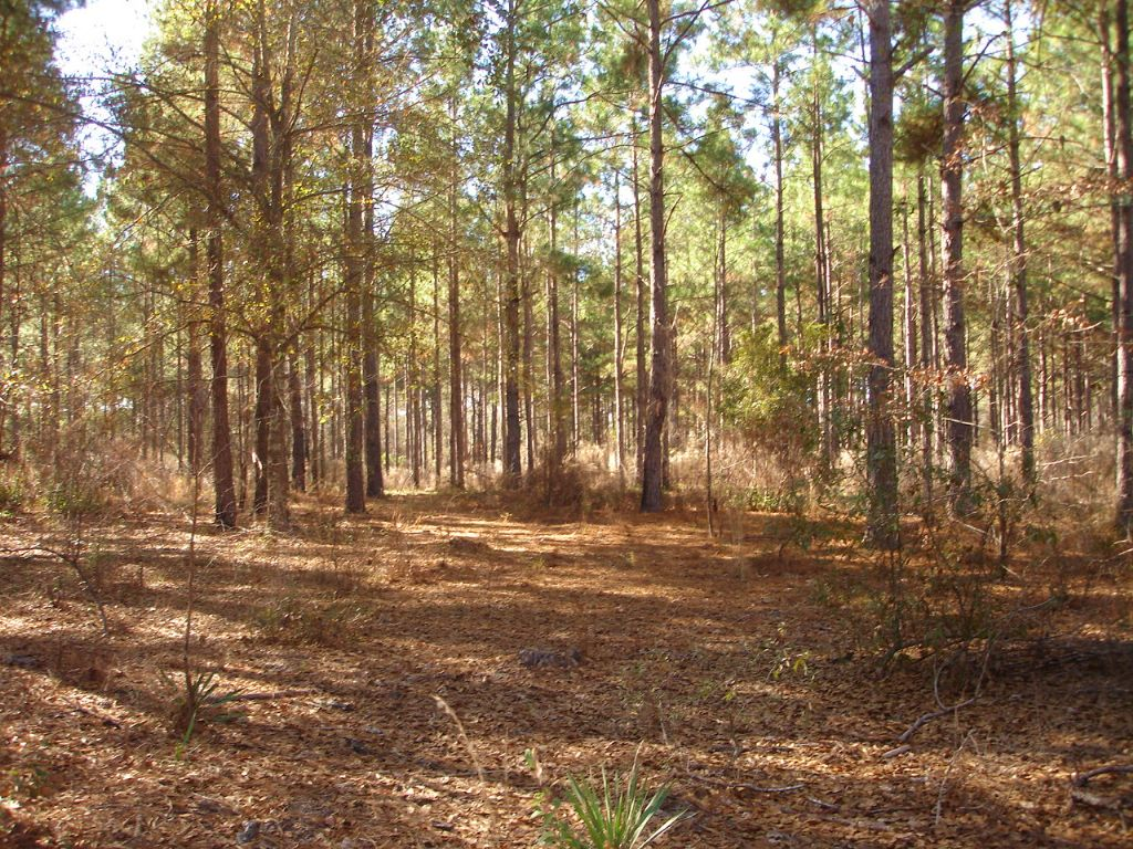 40 Acre Homesite / Hunting Tract : Fitzgerald : Ben Hill County : Georgia
