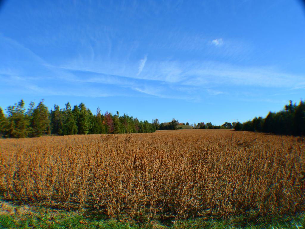 Incredible Farmland - 69+ Acres : Liberty : Alamance County : North Carolina
