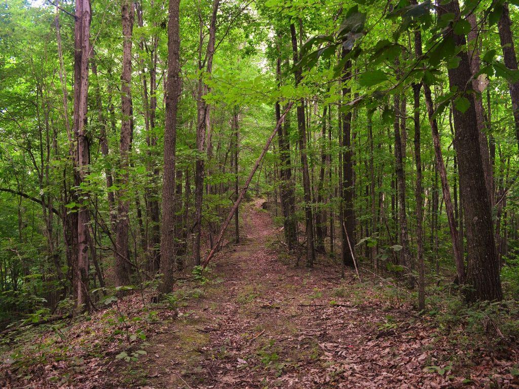Marietta Run - 186 Acres : Stewart : Athens County : Ohio