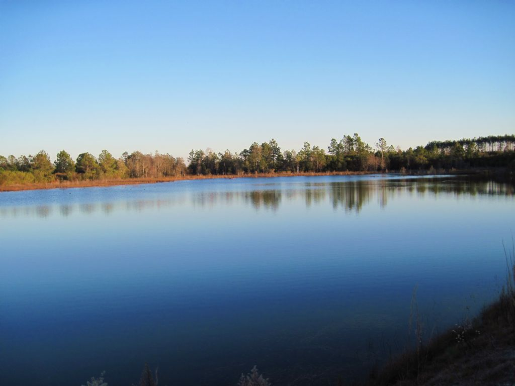 Toole Tract : Compass Lake : Jackson County : Florida