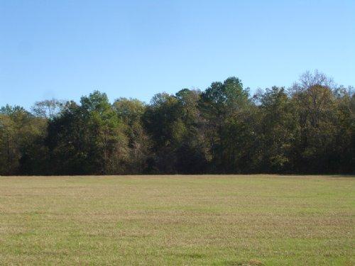Coker Road Farm : Whigham : Grady County : Georgia