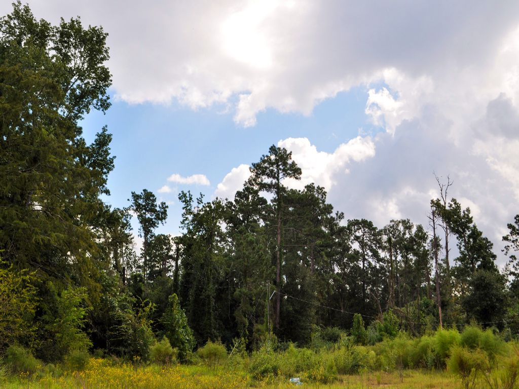 66.2 Acres Fm 787 : Cleveland : Liberty County : Texas