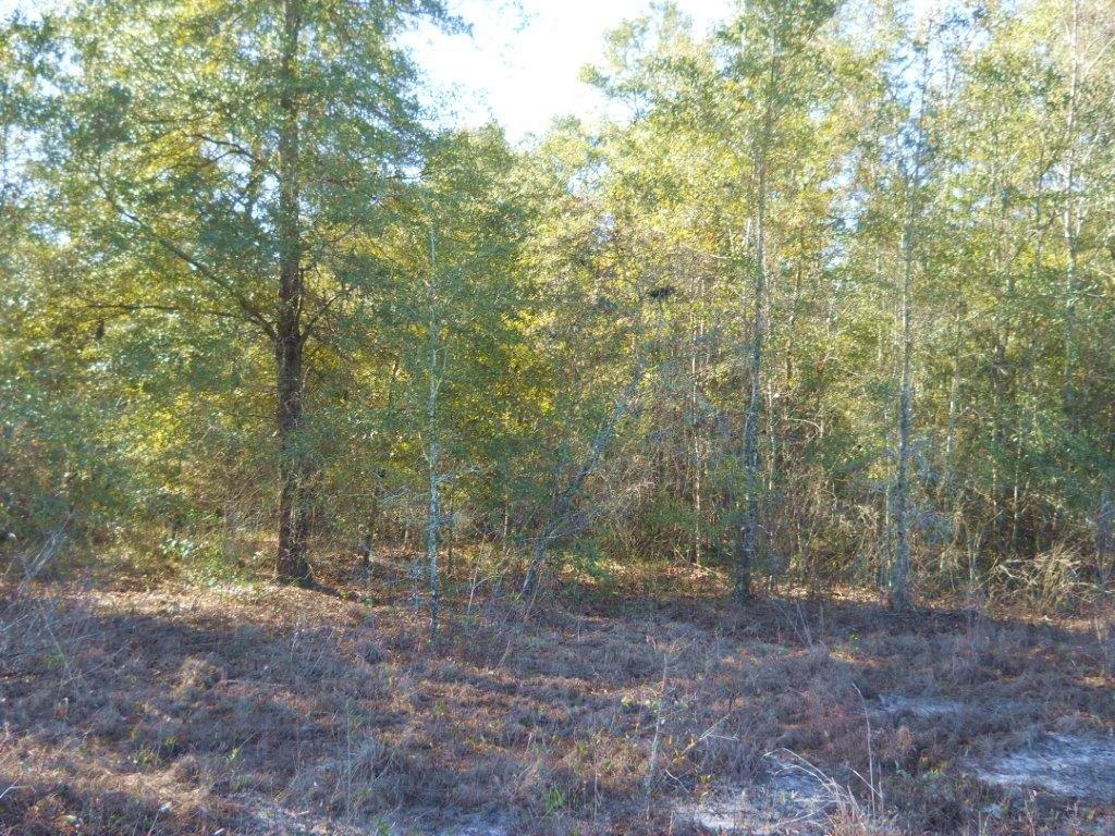 40 Acres With Natural Hardwoods : Jasper : Hamilton County : Florida