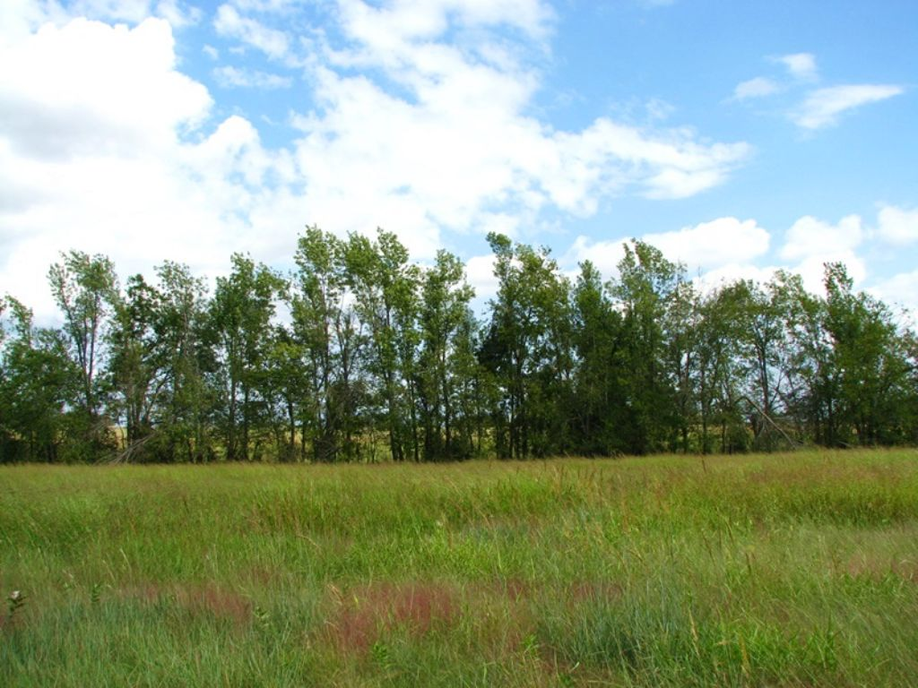 Osage Prairie Tract 1 : Soper : Choctaw County : Oklahoma