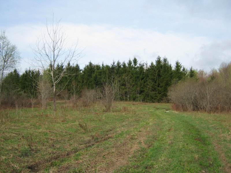 Farmland Near State Forest 57 Ac : Sempronius : Cayuga County : New York