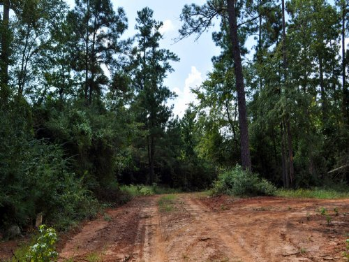 160 Acres Snell Road : Livingston : Polk County : Texas