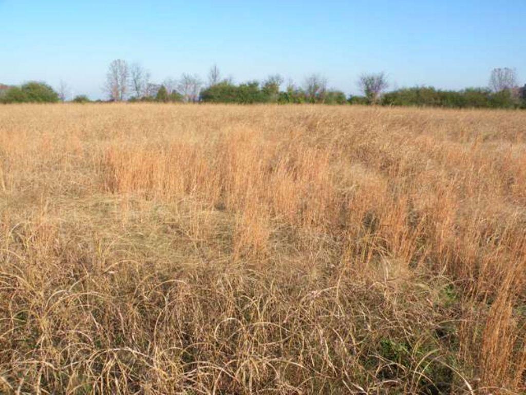 Pasture Land For Sale : Lonoke : Lonoke County : Arkansas