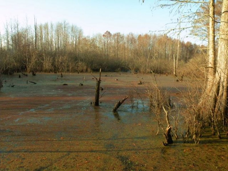 Duck Hunting Property : Scott : Lonoke County : Arkansas