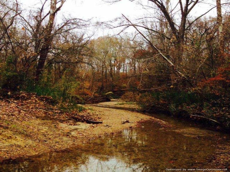325 Acres : Yazoo City : Yazoo County : Mississippi