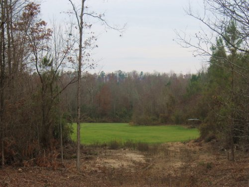 508.5+/- Acres : Altoona : Etowah County : Alabama