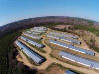 12-house Broiler Farm