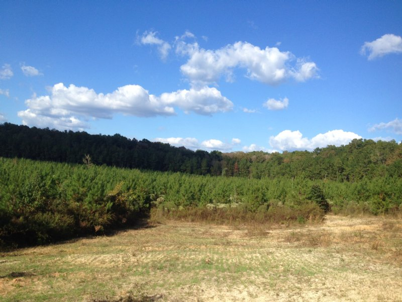 90 Ac Pure Timber Investment : Brookhaven : Lincoln County : Mississippi