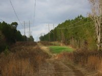 200 Ac Timber And Investment