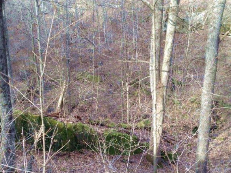 Sr 377 - 129 Acres : Chesterhill : Morgan County : Ohio