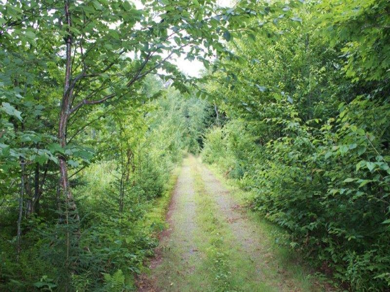 Hunting Land In Tug Hill Region : Lewis : Lewis County : New York