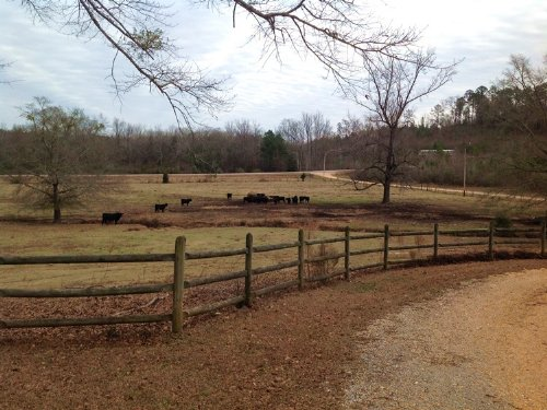 Friendship Road Farm : Brent : Bibb County : Alabama