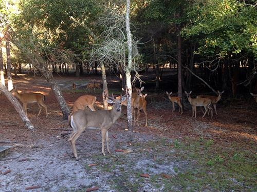 Perry 300 Hunting And Lodge : Perry : Taylor County : Florida