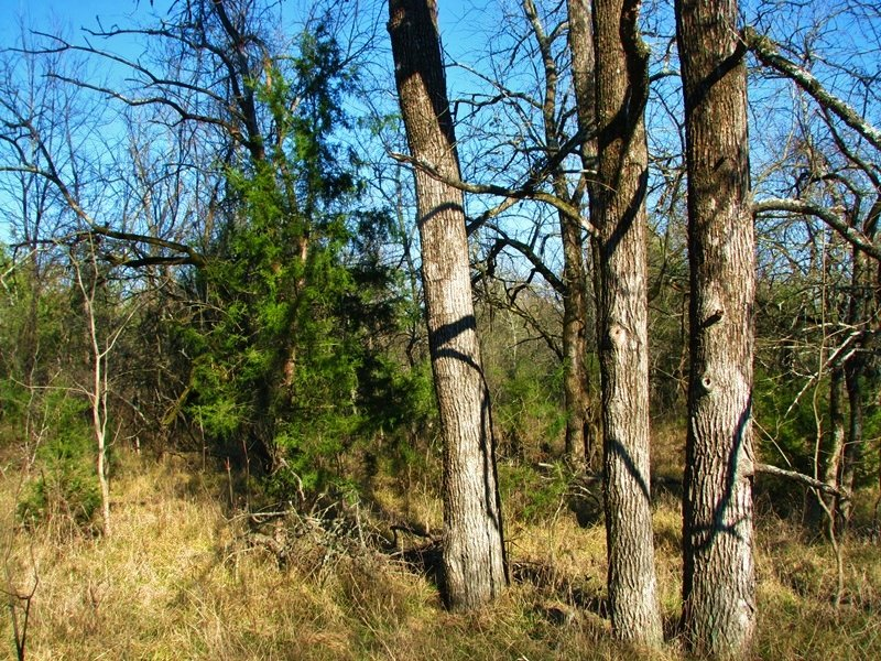Hugo Lake Tract 1 : Hugo : Choctaw County : Oklahoma