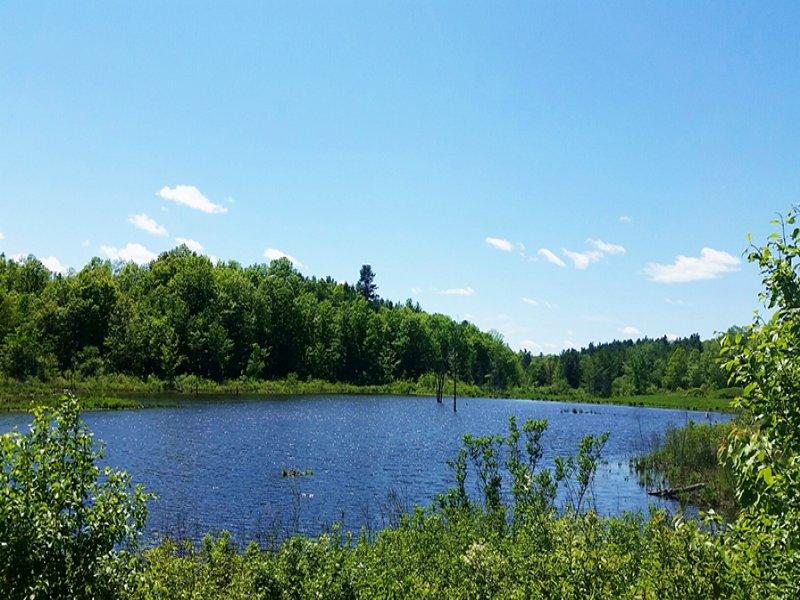 Land Black Lake Borders Forest : Hammond : Saint Lawrence County : New York