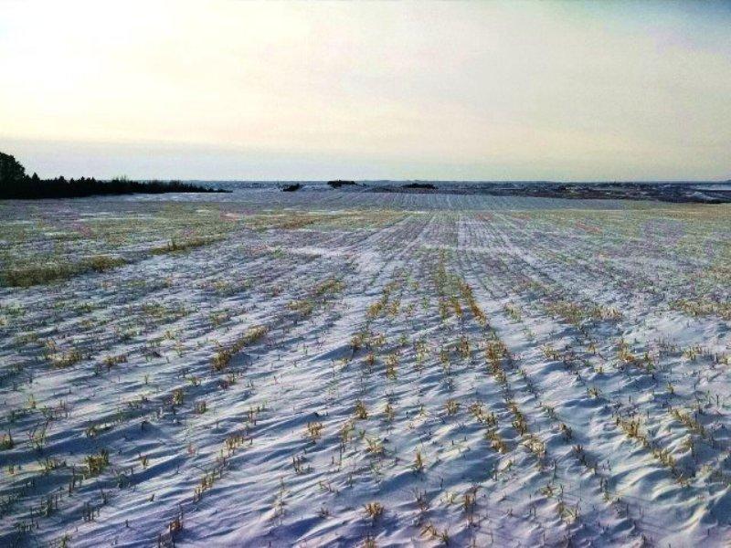 Balance Of Farm And Pasture Land : Mobridge : Walworth County : South Dakota