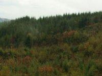 Creek Frontage & View Acreage