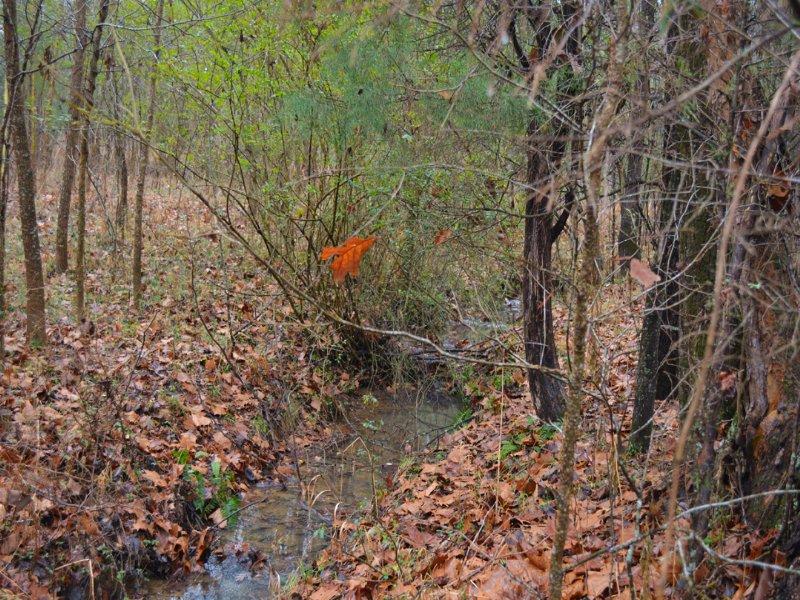 Lot 1 Ralph Moore Road : Bear Creek : Chatham County : North Carolina