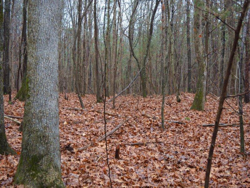 Lot 2 Ralph Moore Road : Bear Creek : Chatham County : North Carolina