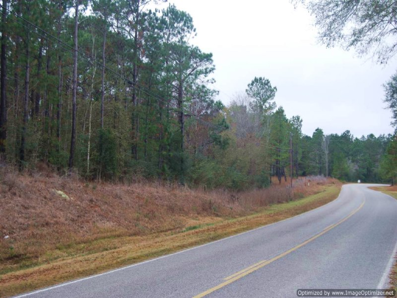 46 Ac Hunting And Timber Tract : Carriere : Pearl River County : Mississippi