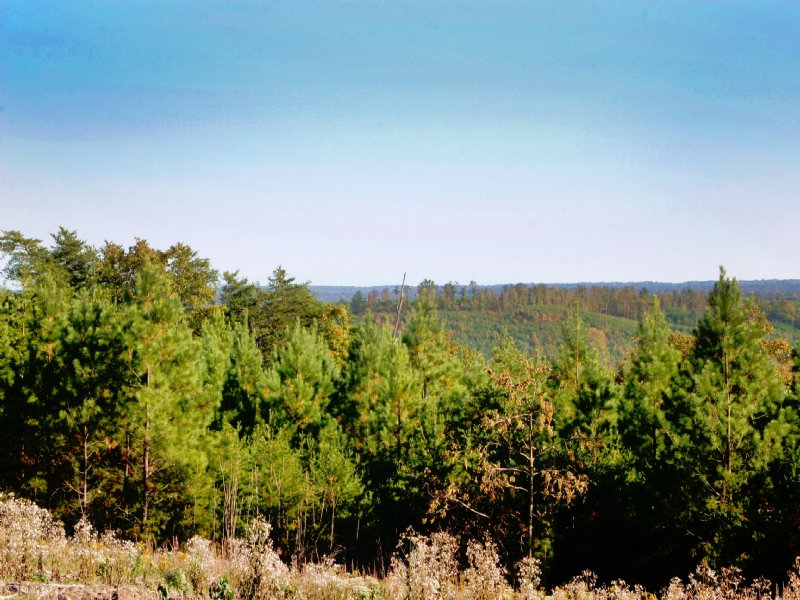 Signal: Large Mtn. Acreage : Dunlap : Sequatchie County : Tennessee