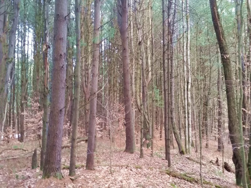 32 Acres For Your New Home Cabin : Vienna : Oneida County : New York
