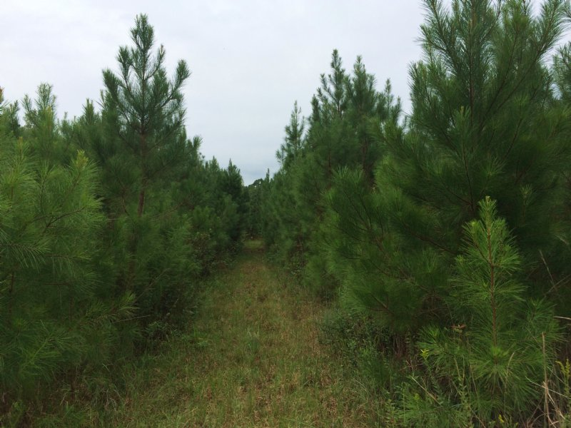 Atkins West Property : Marion : Marion County : South Carolina