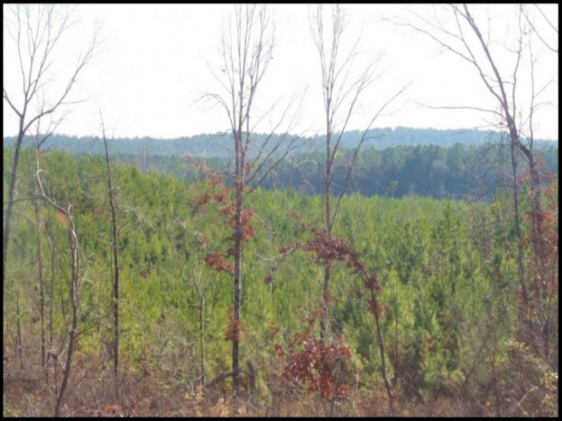 83.8 Acres In Attala County, Missis : Kosciusko : Attala County : Mississippi
