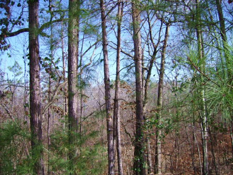 Baldwin Investment Tract : Milledgeville : Baldwin County : Georgia